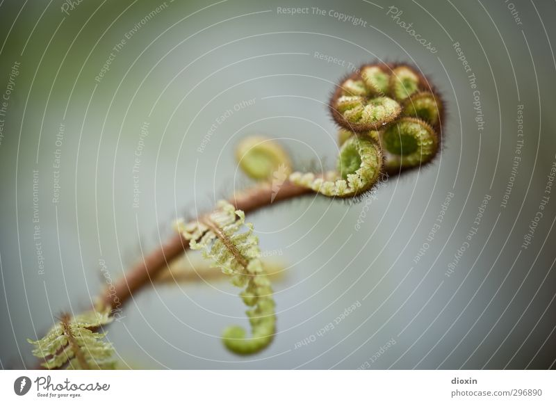 fern colours Environment Nature Plant Fern Leaf Foliage plant Wild plant Growth Natural Spiral Colour photo Close-up Detail Macro (Extreme close-up) Deserted