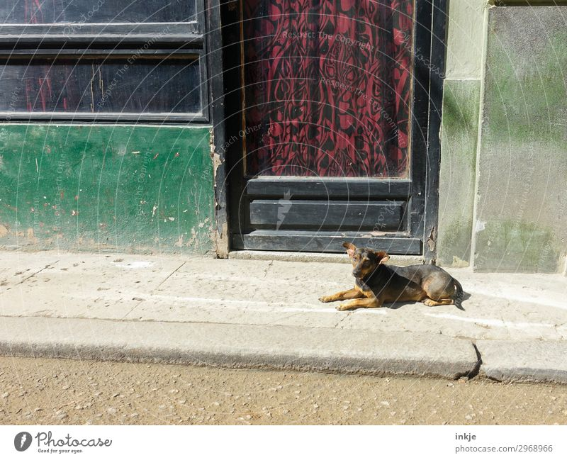 Dog Old Animal Window - a Royalty Free Stock Photo from Photocase