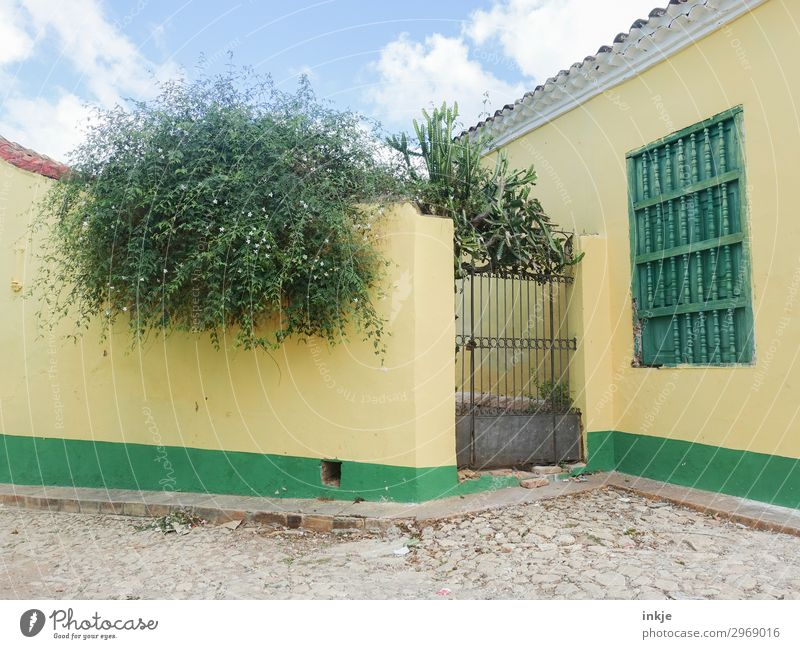 Cuban backyard Summer Plant Tree Bushes Village Deserted House (Residential Structure) Places Wall (barrier) Wall (building) Iron gate Gate Backyard Natural