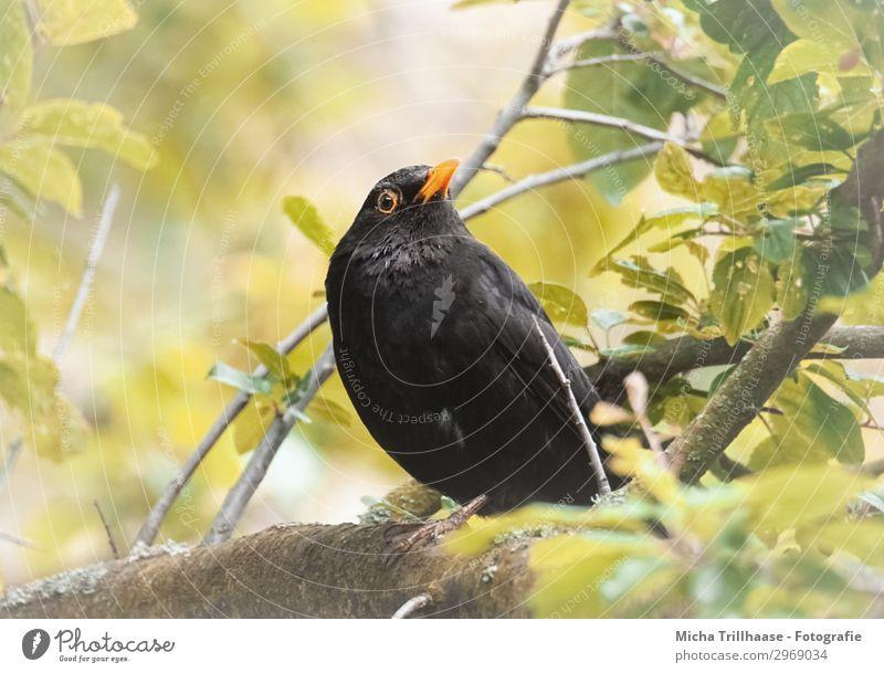 Nature Green Sun Tree Animal Leaf Black Yellow Eyes Natural Orange Bird Wild animal Feather Beautiful weather Wing