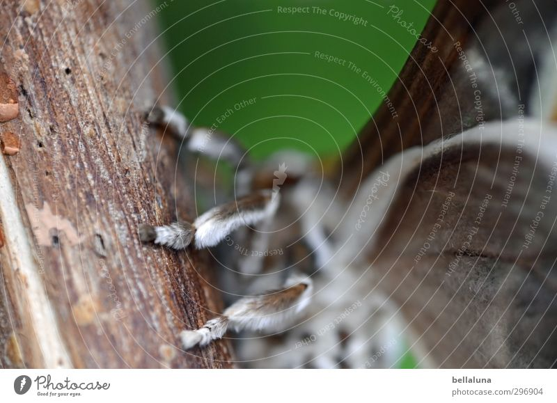Tarantula? Nature Tree Garden Park Meadow Animal Wild animal Butterfly Wing Pelt 1 Sit Esthetic Exceptional Exotic Beautiful Near Natural Brown Gray Green Moth