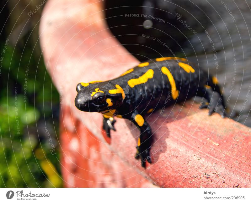 Nature Beautiful Summer Red Animal Black Yellow Spring Funny Garden Exceptional Wild animal Beautiful weather Perspective Esthetic Cute