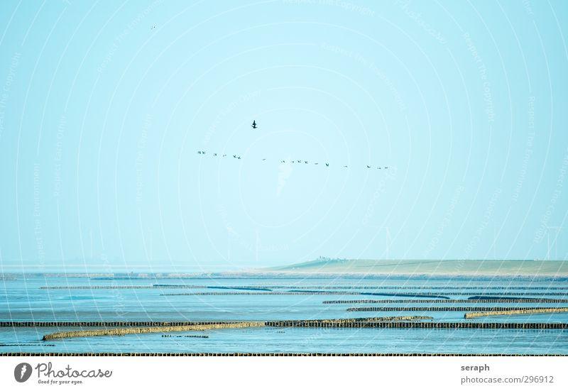 Nature Ocean Landscape Environment Coast Feather North Sea Wind energy plant Rural Goose Flock Mud flats Nature reserve Tide Maritime Ornithology