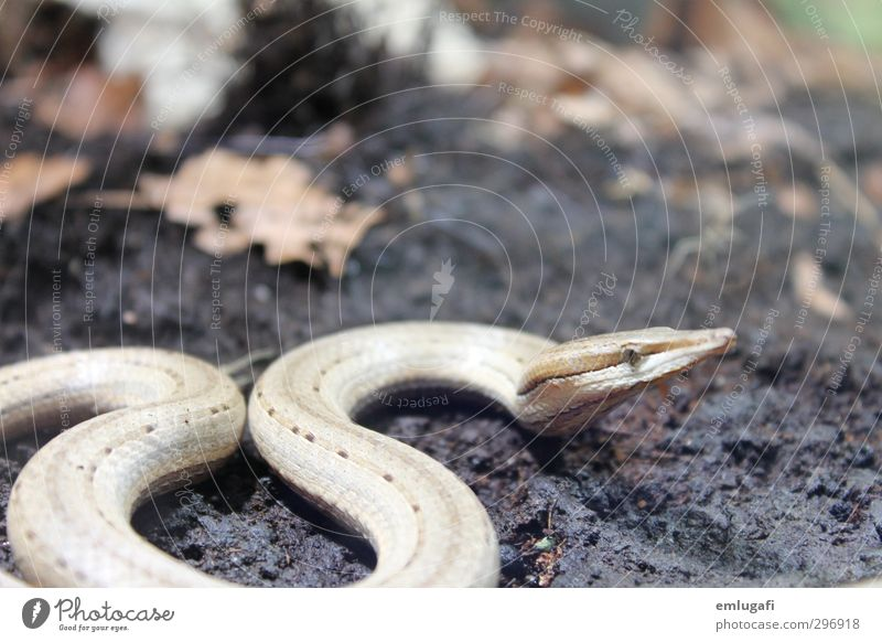 Nature Animal Forest Brown Exceptional Wild animal Snake