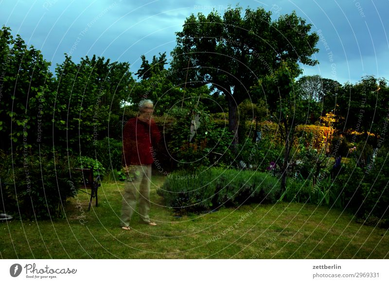 In the evening in the garden Tree Movement Fantasy Garden Grass Sky Heaven Garden plot Fairy tale Nature Lawn Bushes Copy Space Depth of field Meadow Man