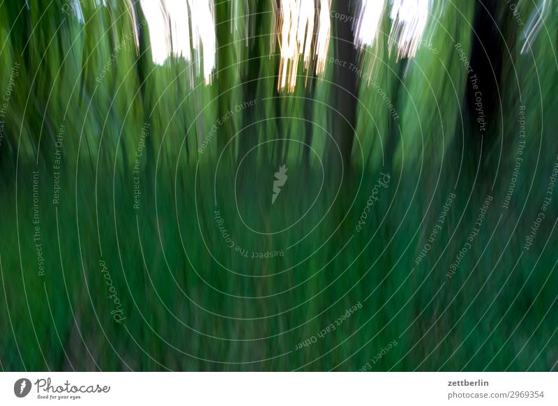 in the wood Vacation & Travel Lost Irritation Hiding place Nature Forest Virgin forest Undergrowth Park Tree Blur Movement Deserted Copy Space Motion blur