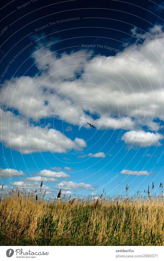 Meadow down, sky up, bird in the middle Vacation & Travel Island Agriculture Mecklenburg-Western Pomerania good for the monk Nature Rügen Tourism Horizon