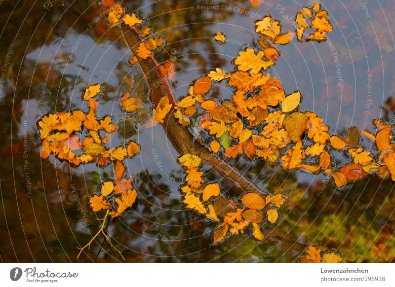 Nature Blue Beautiful Water Plant Loneliness Leaf Calm Yellow Autumn Swimming & Bathing Natural Brown Moody Orange Beautiful weather