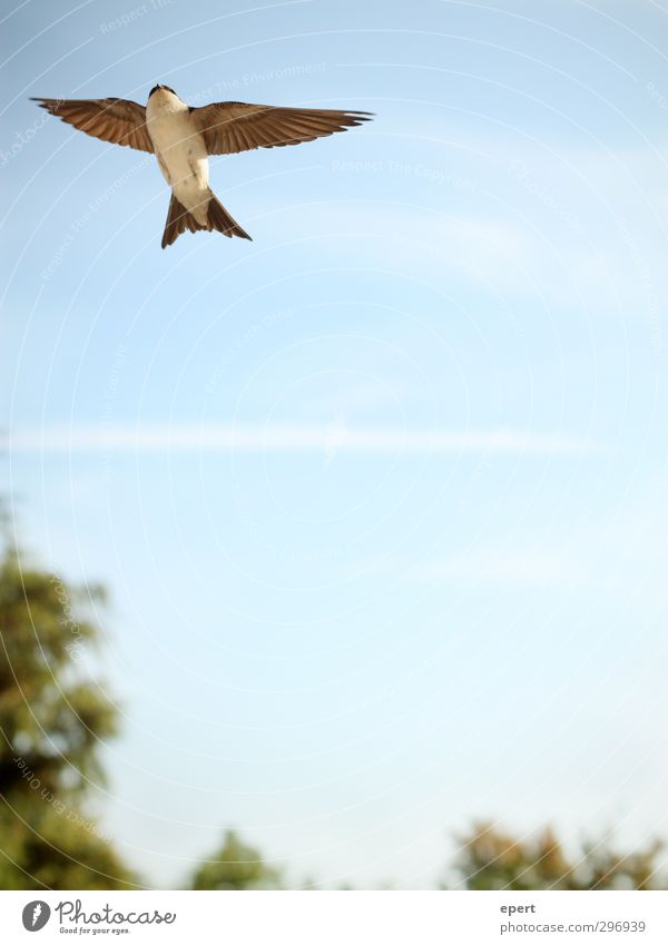 Sky Nature Beautiful Animal Movement Freedom Above Air Bird Flying Elegant Beautiful weather Wing Hope Infinity