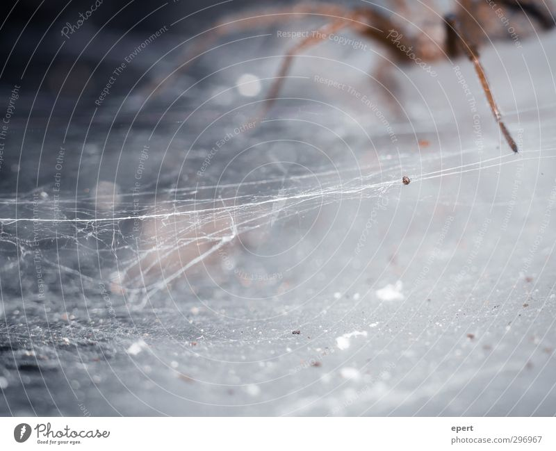 The Architect Animal Spider 1 Build Crawl Disgust Creepy Cold Testing & Control Art Precision Senses Spider's web Produce Tension Colour photo Close-up Detail