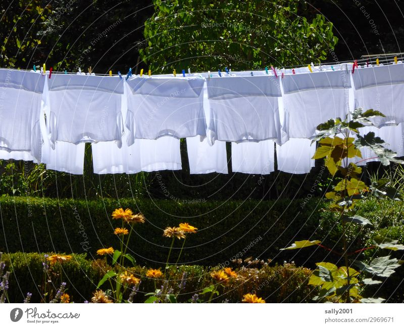 Whitewash day... Summer Tree Flower Garden Clothing T-shirt Shirt Undershirt Hang Dry Washing Washing day Hang up Clothes peg Exterior shot Colour photo