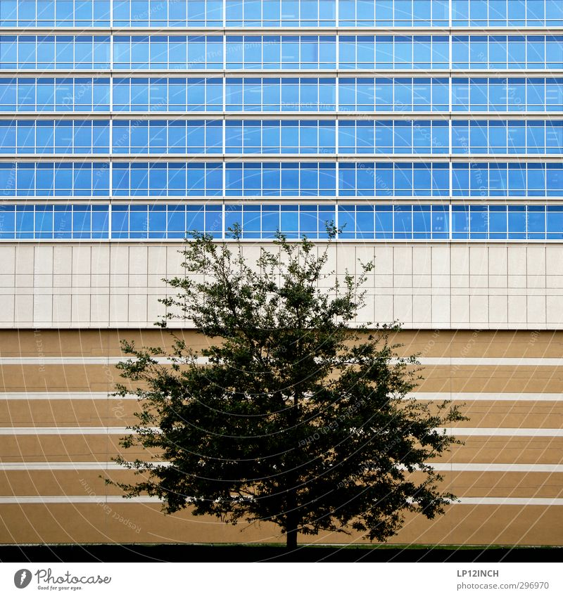 Nature City Tree Animal House (Residential Structure) Environment Window Wall (building) Architecture Wall (barrier) Building Office Facade High-rise USA