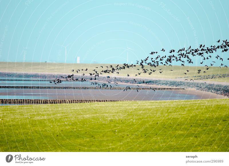 North Frisland Landscape Beach Environment Coast Bird Wild animal North Sea Wind energy plant Story Goose Flock Mud flats Ornithology Migratory bird Sandbank