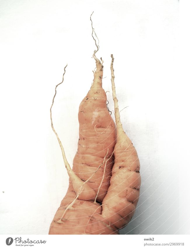 mortgaged property Carrot Fresh Healthy Together Delicious Wild Orange Bizarre Design Root Whimsical uncontrolled growth Crunchy Vitamin Healthy Eating