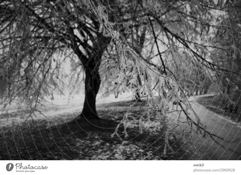 iced Environment Nature Landscape Plant Winter Beautiful weather Tree Grass Twigs and branches Ice crystal Lanes & trails Dark Cold Black & white photo