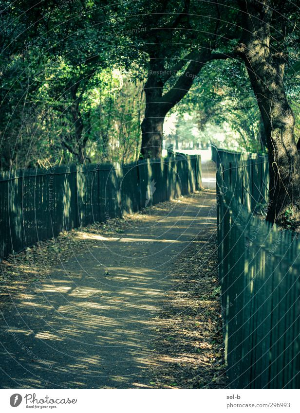 Passage Nature Green Tree Leaf Spring Lanes & trails Healthy Natural Dream Park Bushes Future To go for a walk Branch Target Opening