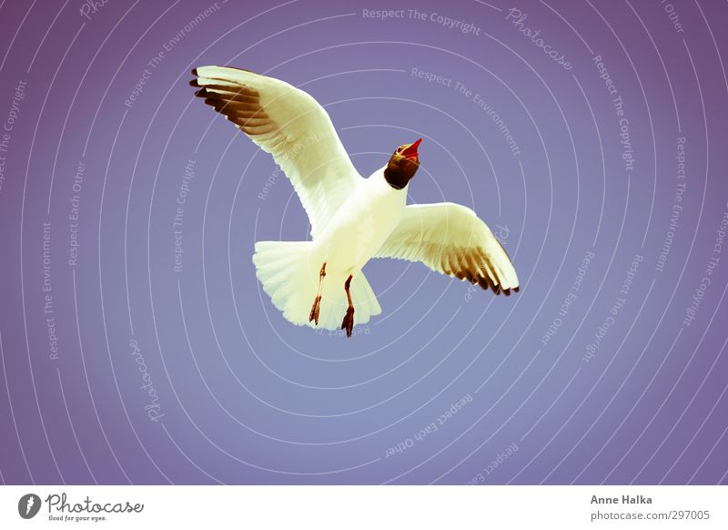 There's something in the air - 2 Bird Wing 1 Animal Flock Feeding seagull Gull birds Fly Airplane Height wing width Red Blue White Horizon take off
