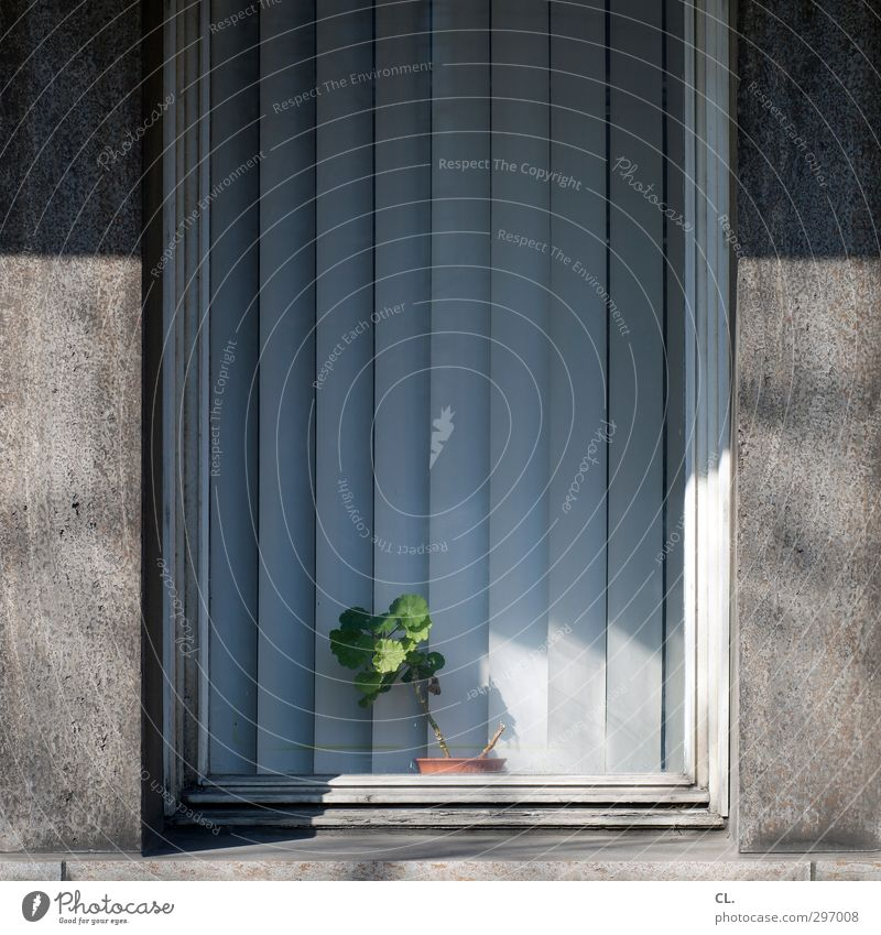 Green Plant Flower House (Residential Structure) Window Wall (building) Wall (barrier) Gray Office Arrangement Living or residing Decoration Gloomy Clean Drape Boredom