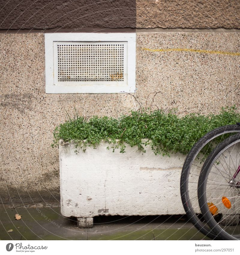 City Green Plant Flower House (Residential Structure) Wall (building) Sports Lanes & trails Wall (barrier) Stone Metal Brown Flat (apartment) Facade Bicycle Concrete
