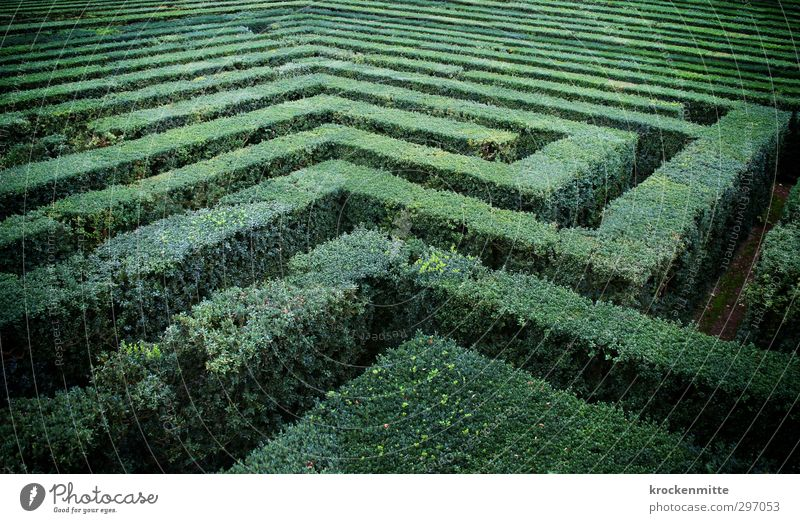 crazy garden Plant Foliage plant Garden Green Distress Irritation Labyrinth Maze Discover Park Bushes Tourist Attraction Search Nature Wacky Doomed Hopelessness