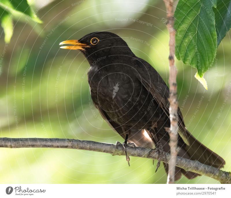 Nature Green Tree Relaxation Animal Leaf Black Yellow Environment Eyes Natural Orange Bird Wild animal Stand Feather