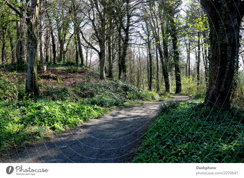 Woodland Footpath on a Spring Morning Hiking Nature Landscape Plant Sky Tree Grass Bushes Moss Ivy Leaf Park Forest Hill Lanes & trails Stone Natural Brown