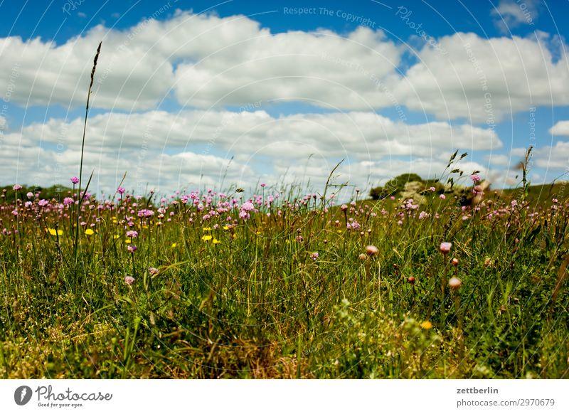 summer meadow Vacation & Travel Island Coast Mecklenburg-Western Pomerania good for the monk Nature Rügen Tourism Meadow Grass Summer Horizon Far-off places