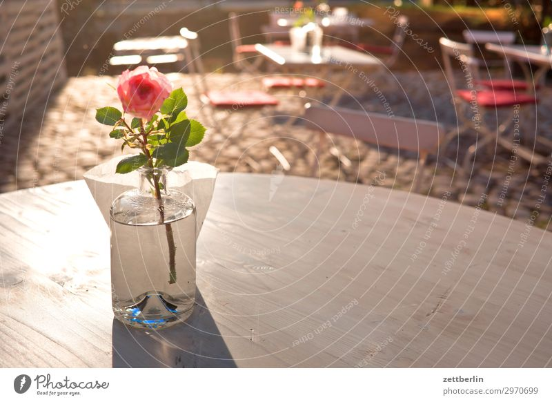 Table with decorose Restaurant Roadhouse Café Gastronomy Decoration Rose Vase Flower Flower vase Deserted Copy Space Sun Back-light Dazzle Bright Chair