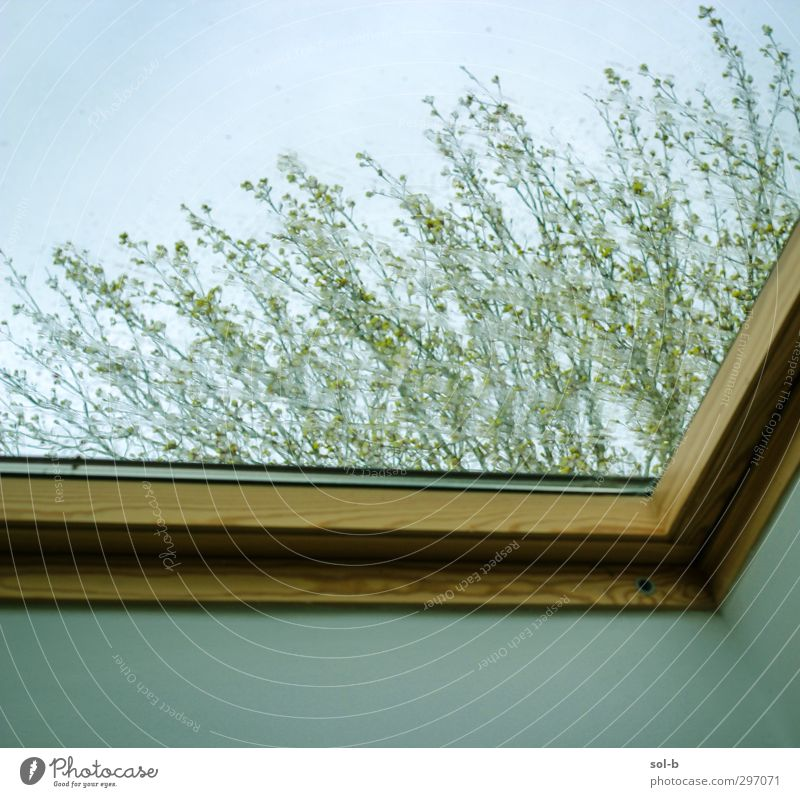 Rain Living or residing House (Residential Structure) House building Nature Plant Drops of water Bad weather Tree Window Skylight Wet Green Orange Loneliness