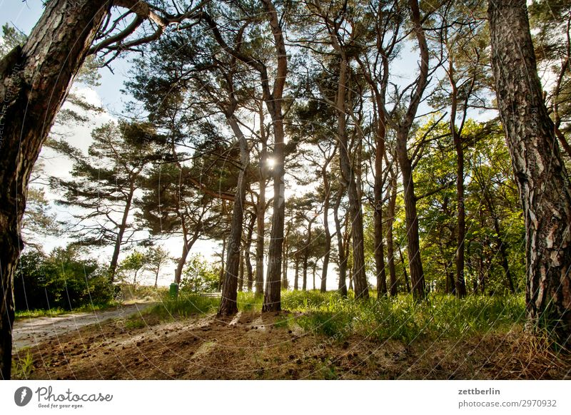 Vacation & Travel Nature Ocean Forest Travel photography Lanes & trails Coast Tourism Hiking Island Footpath To go for a walk Baltic Sea Bay Promenade Rügen