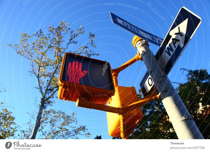 Lanes & trails Transport Signs and labeling Traffic infrastructure Downtown Traffic light Pedestrian Spring fever Road sign Sign forest