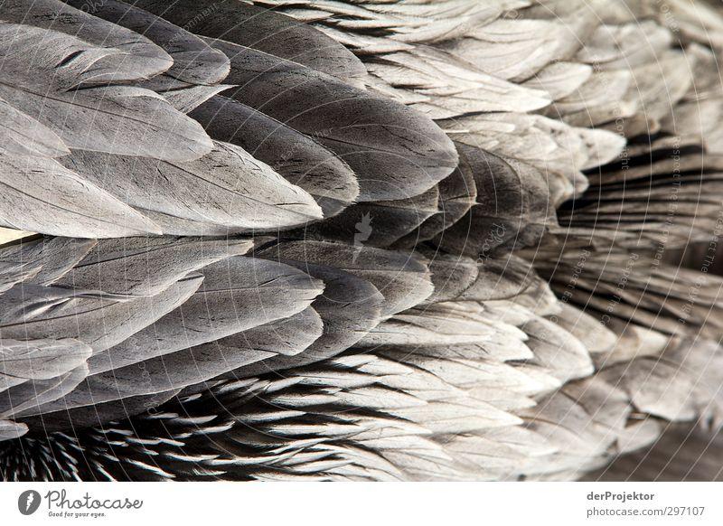 Nature White Animal Black Environment Spring Gray Bird Elegant Free Esthetic Feather Zoo Silver Exotic Sharp-edged