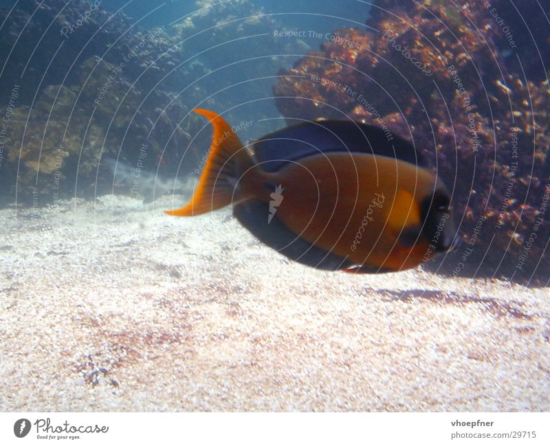 saltwater fish Coral Multicoloured Ocean Sea water Underwater photo Lacking Aquarium Fish Water Seldom