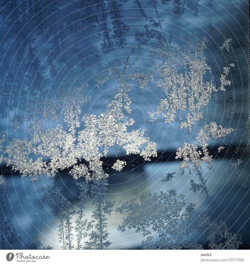 ice flowers Winter Ice Frost Glass Cold Near Blue Frostwork Ice crystal Colour photo Exterior shot Close-up Detail Abstract Pattern Structures and shapes