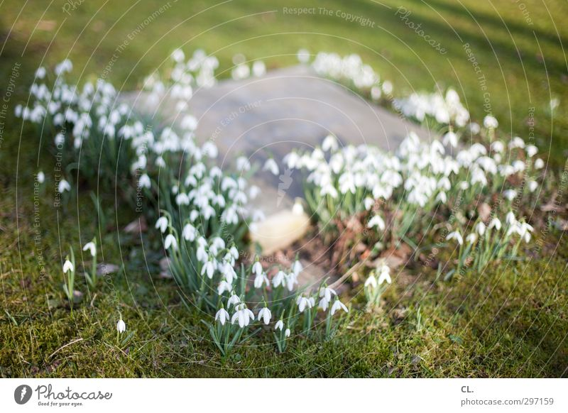 Nature Plant Flower Calm Meadow Death Grass Spring Sadness Religion and faith Blossom Park Earth Transience Grief Blossoming