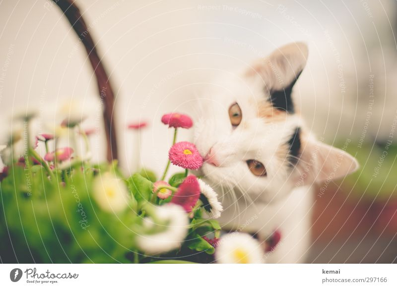 flower child Environment Plant Flower Animal Pet Cat Ear Eyes 1 Baby animal Small Curiosity Cute Pink Odor Colour photo Subdued colour Exterior shot Close-up
