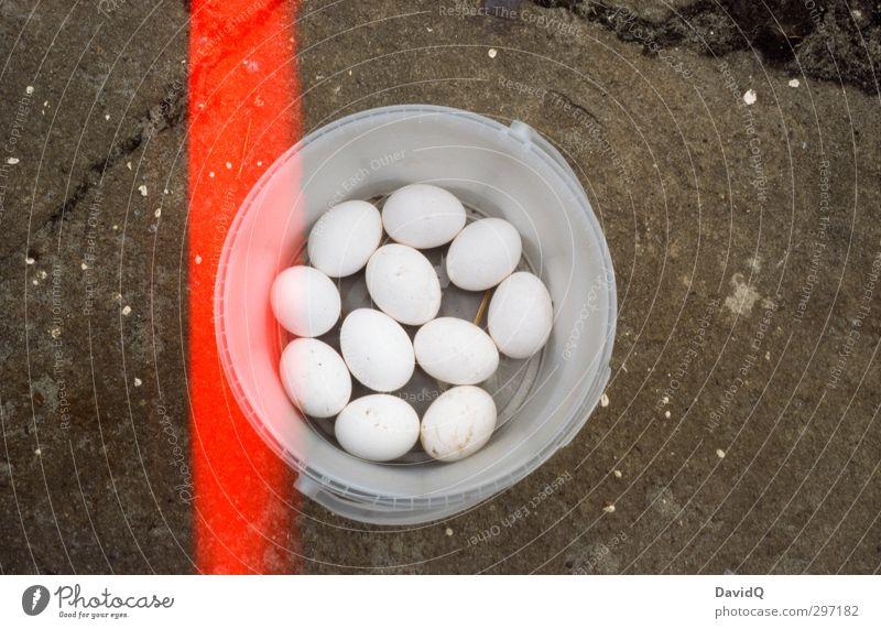 11 friends Egg Nutrition Authentic Fresh Natural Bucket Accumulate Organic produce Organic farming Agriculture Hen's egg Light leak Colour photo Close-up Detail