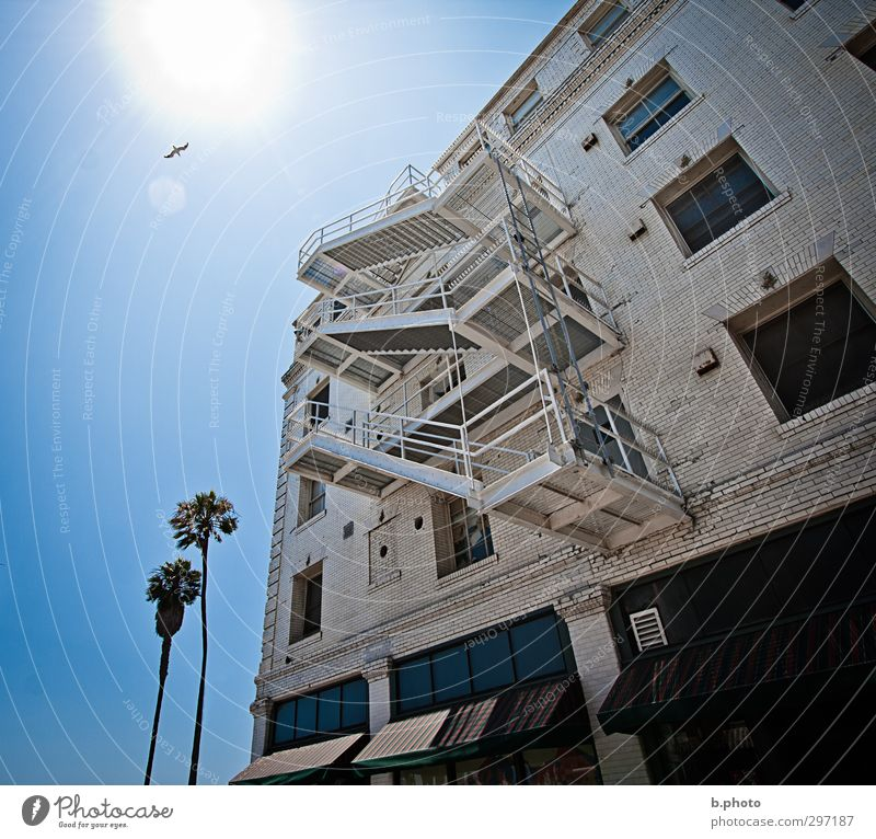 Escape from the Sun palms Los Angeles California House (Residential Structure) Manmade structures Building Architecture Wall (barrier) Wall (building) Stairs