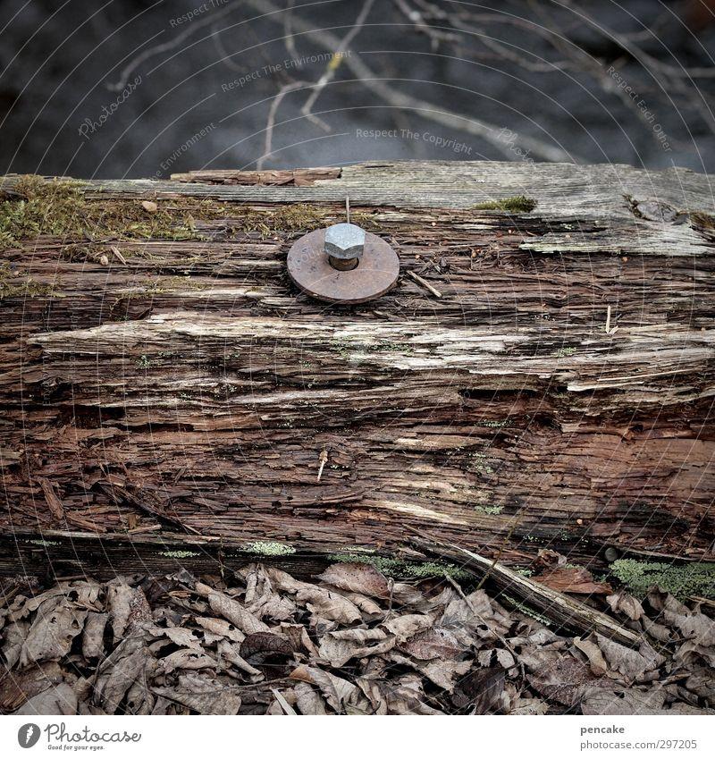 bridge day II Environment Nature Earth River Bridge Wood Rust Water Old Make Stagnating Decline Transience Connection Screw Slice Brittle Dark