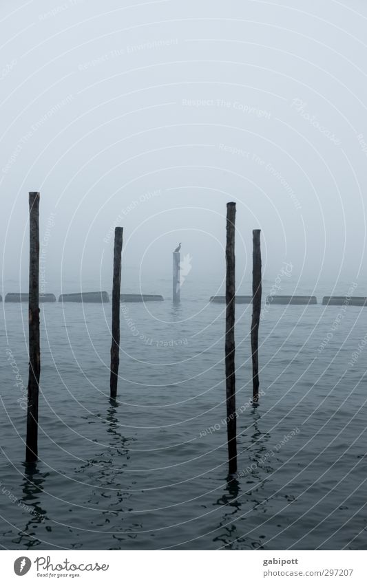 Mope with bird Nature Water Winter Bad weather Fog Coast Ocean Venice Port City Harbour Cold Gloomy Blue Loneliness Apocalyptic sentiment Transience