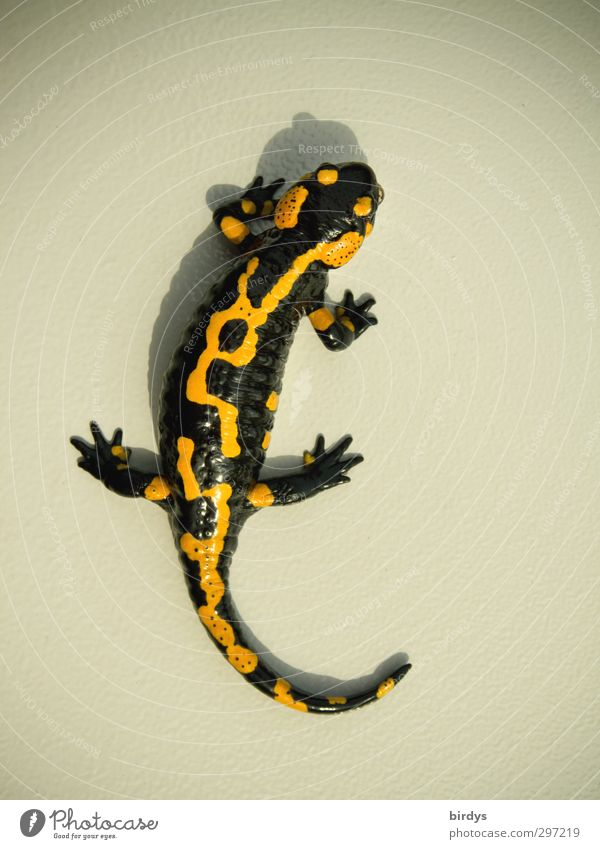 Beautiful Animal Black Yellow Exceptional Wild animal Elegant Design Esthetic Uniqueness Positive Crawl Identity Love of animals Body language Salamander
