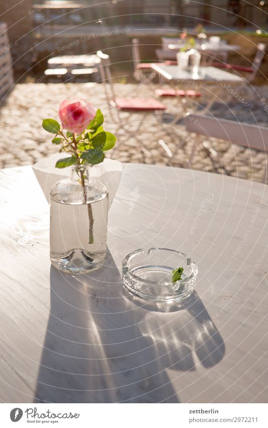rose Table Rose Vase Decoration Ashtray Glass Sidewalk café Snack bar Gastronomy Hostel Break Summer Sun Light White Deserted Copy Space Calm Relaxation