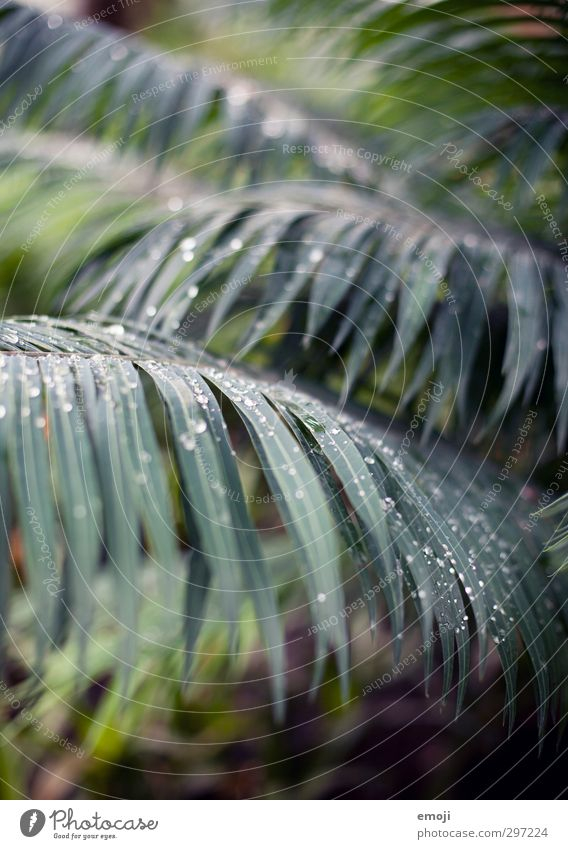 Nature Green Plant Tree Leaf Environment Natural Bushes Drops of water Virgin forest Exotic Palm frond