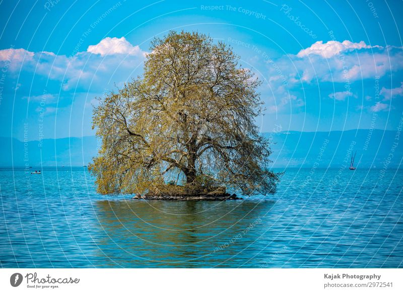 Lonely tree on Lake Geneva Well-being Leisure and hobbies Vacation & Travel Tourism Freedom Summer Summer vacation Swimming & Bathing Sailing Environment Nature