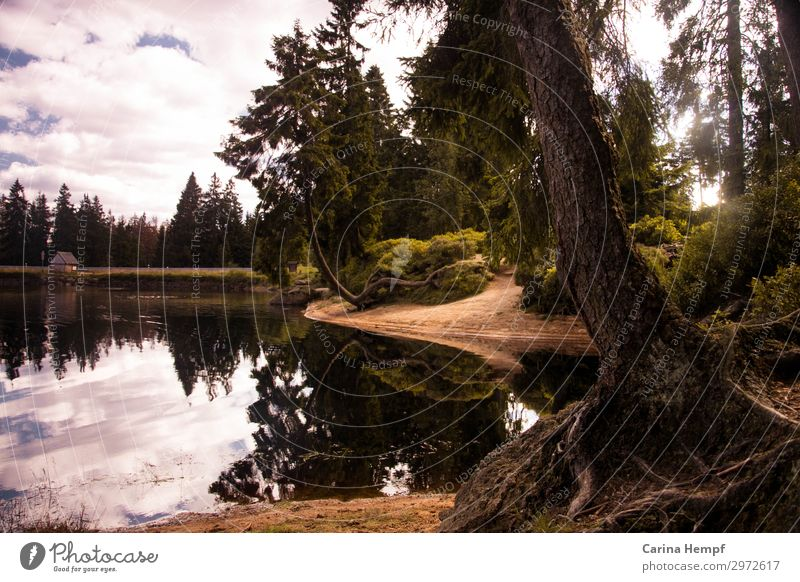 Vacation & Travel Nature Summer Plant Landscape Tree Relaxation Calm Forest Life Autumn Environment Natural Tourism Freedom Lake