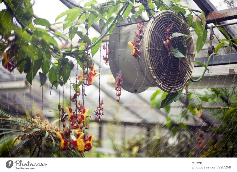 """""""Orchid House"""" Nature Plant Spring Flower Foliage plant Exotic Natural Green Greenhouse Ventilation Colour photo Interior shot Deserted Day Long shot"""