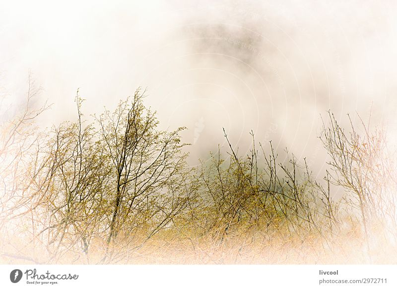 fog in the bush, europe Vacation & Travel Tourism Trip Mountain Nature Landscape Plant Spring Fog Tree Leaf Forest Hill Authentic Exceptional Uniqueness