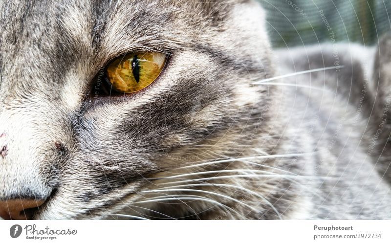 a green cat eyes close up Happy Beautiful Face Playing Animal Fur coat Pet Cat Dark Small Natural Cute Blue Yellow Gray Green White Colour Kitten Whisker