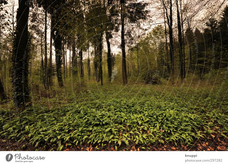 welcome to the jungle Environment Nature Landscape Plant Clouds Sunlight Spring Bad weather Tree Leaf Wild plant Forest Exceptional Dark Yellow Green Black