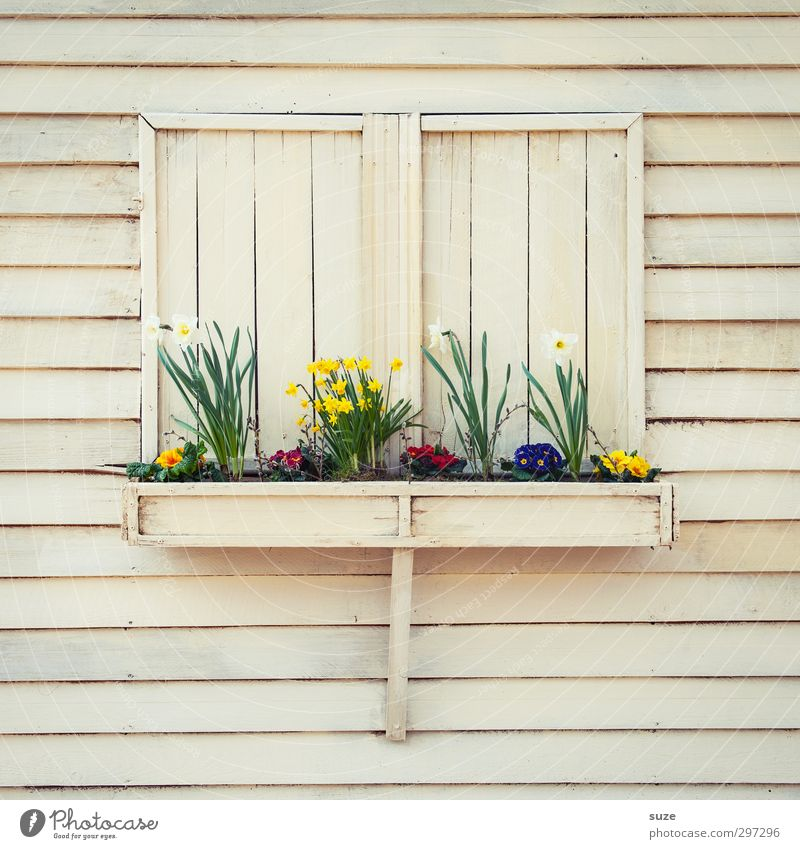 Beautiful Plant Flower Environment Window Wall (building) Spring Wood Wall (barrier) Small Blossom Natural Facade Flat (apartment) Leisure and hobbies Lifestyle